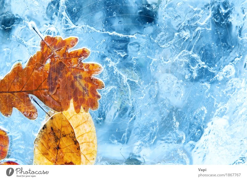 Gefallener Herbstlaub im blauen Eis Natur Pflanze Farbe Wasser weiß rot Blatt Winter Umwelt gelb natürlich Schnee orange Wetter