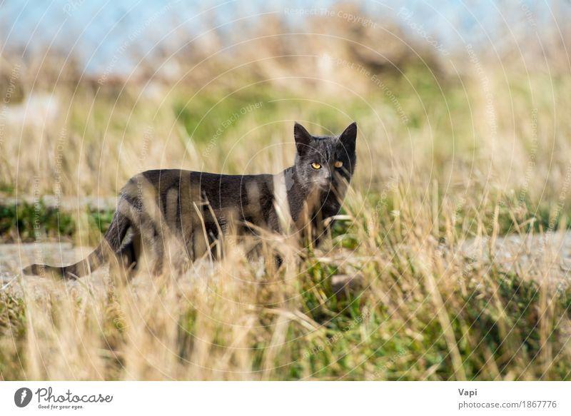 Schwarze Katze im Gras Natur Landschaft Pflanze Tier Garten Park Wiese Haustier Wildtier 1 Zusammensein kuschlig klein niedlich weich blau gelb grau grün