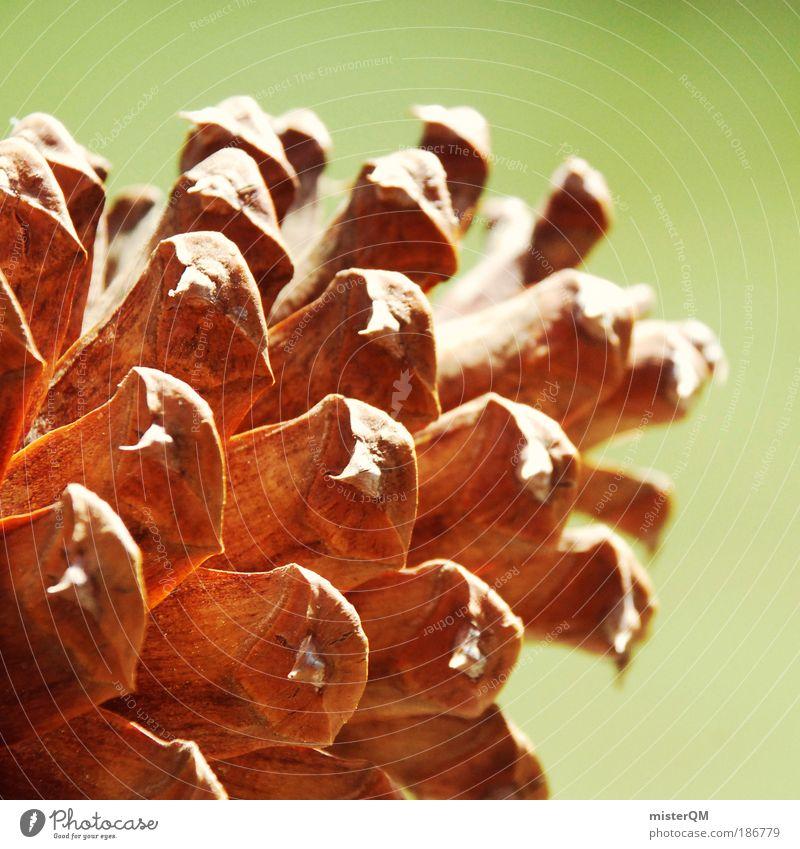 Da hast'n Zapfen. Natur Wärme Leben natürlich braun Zufriedenheit Klima Dekoration & Verzierung ästhetisch Zukunft Symbole & Metaphern USA harmonisch Samen Silhouette Nationalpark