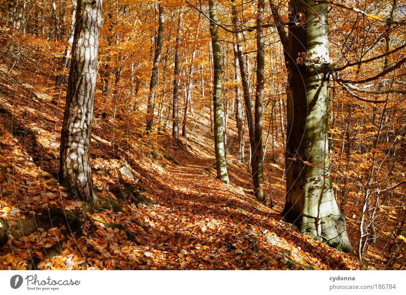 Herbst Natur schön Baum ruhig Blatt Farbe Wald Leben Erholung Freiheit träumen Wege & Pfade Landschaft orange Wind