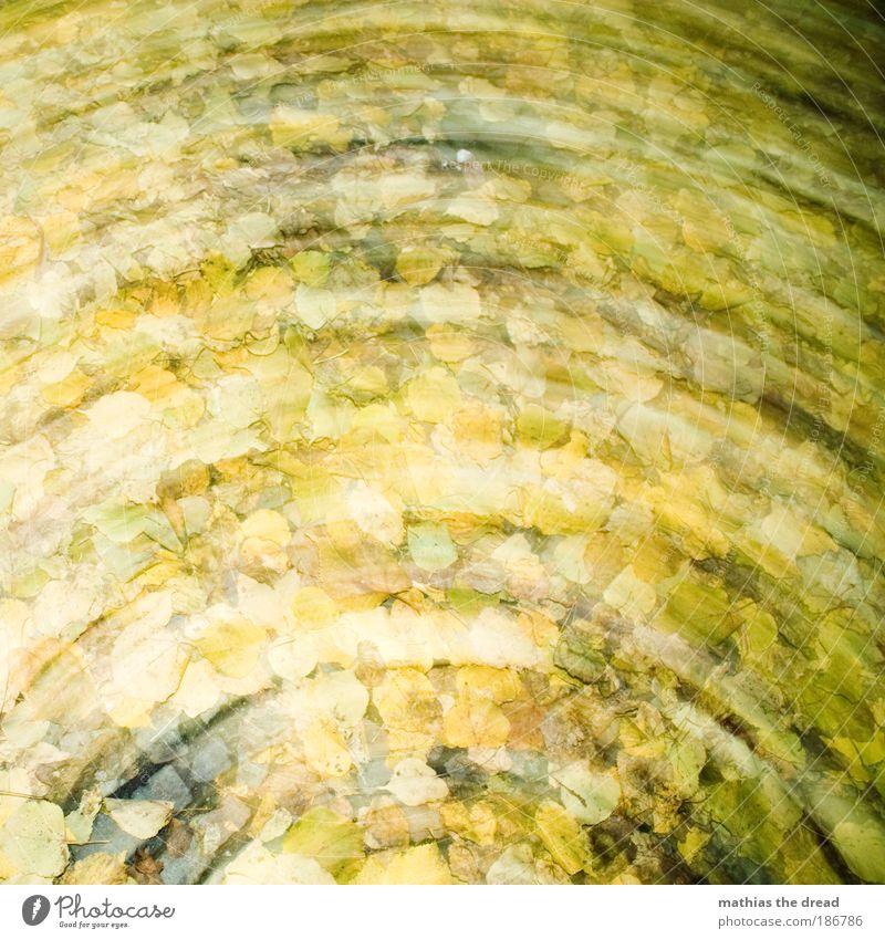 LAUB Umwelt Natur Landschaft Pflanze Herbst schlechtes Wetter Wind Regen Blatt Park Wald Bewegung drehen Kreisbahn gelb mosaikpflaster nass dreckig Dynamik