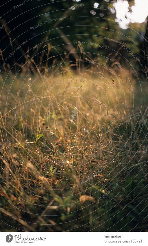 heiß war es im Sommer Natur schön Pflanze Freude Ferien & Urlaub & Reisen Erholung Wiese Umwelt Gras Park Kunst Freizeit & Hobby lang Jagd Lächeln Lebensfreude