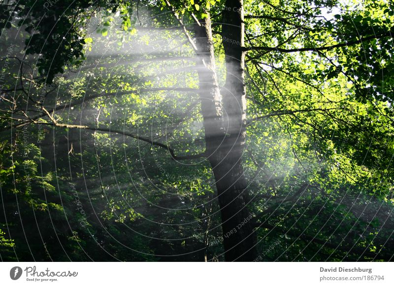 Lichter Moment Natur grün schön Sommer Baum Pflanze Blatt ruhig schwarz Wald Umwelt Frühling Luft Nebel Ast