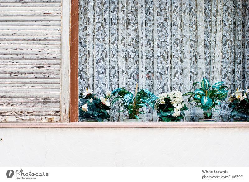 homesweethome Stil Pflanze Topfpflanze Dorf Haus Fenster authentisch hässlich Kitsch trashig Tradition Farbfoto Außenaufnahme Textfreiraum unten Tag