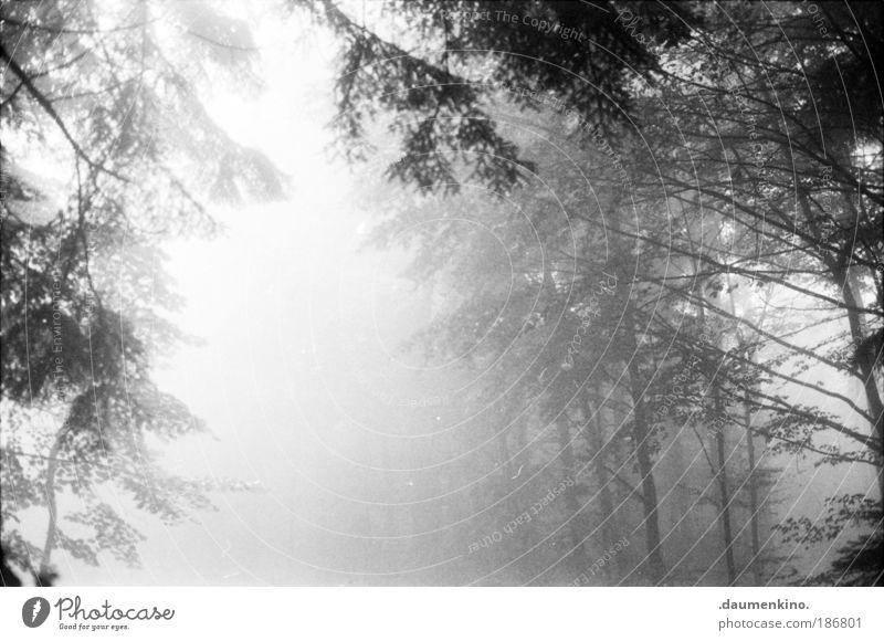 nuance Natur alt Baum Einsamkeit Wald Leben dunkel Herbst Gefühle Denken Landschaft Stimmung Angst Nebel Erde ästhetisch
