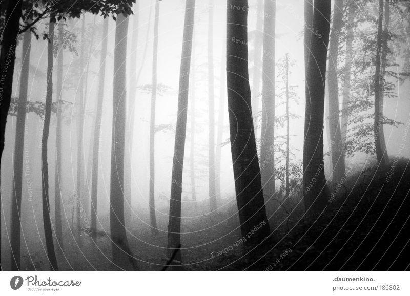 diagonale Natur Landschaft Erde Herbst Nebel Baum Wald alt beobachten berühren Denken entdecken fallen ästhetisch bedrohlich dunkel Gefühle Stimmung Müdigkeit
