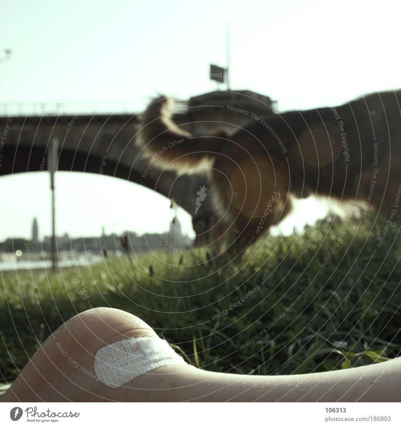 Fotonummer 142531 Haustier Hund hell Brücke Heftpflaster Fuß Schwanz Gras Eindruck Tag faulenzen liegen Pause Silhouette Dresden Elbwiese Erholung Farbfoto
