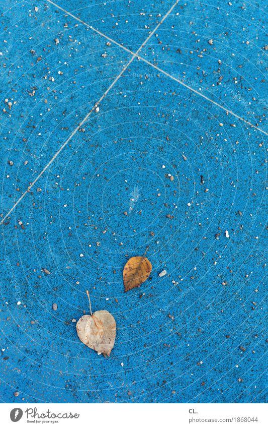 2 Blätter Umwelt Natur Herbst Wetter Blatt Boden Stein Linie blau braun Vergänglichkeit herbstlich Herbstbeginn Herbstwetter Herbstlaub Farbfoto Außenaufnahme