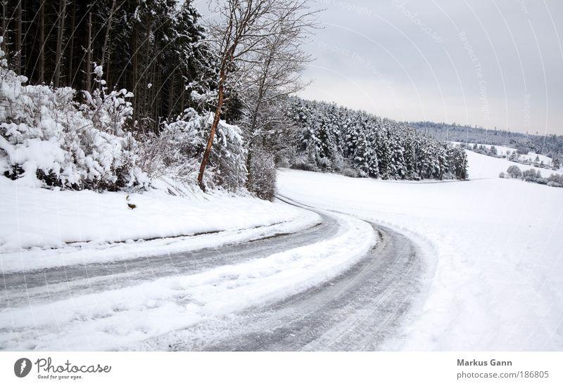 Glatte Strasse Natur weiß Baum Winter Straße Wald Schnee grau Landschaft Eis Frost bedrohlich Verkehrswege