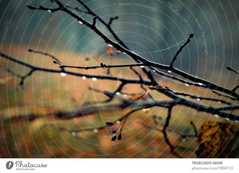 Novemberblues 2 Natur Landschaft Pflanze Wassertropfen Herbst Klima schlechtes Wetter Regen Baum Gras Sträucher Park Wald blau braun schwarz silber Romantik