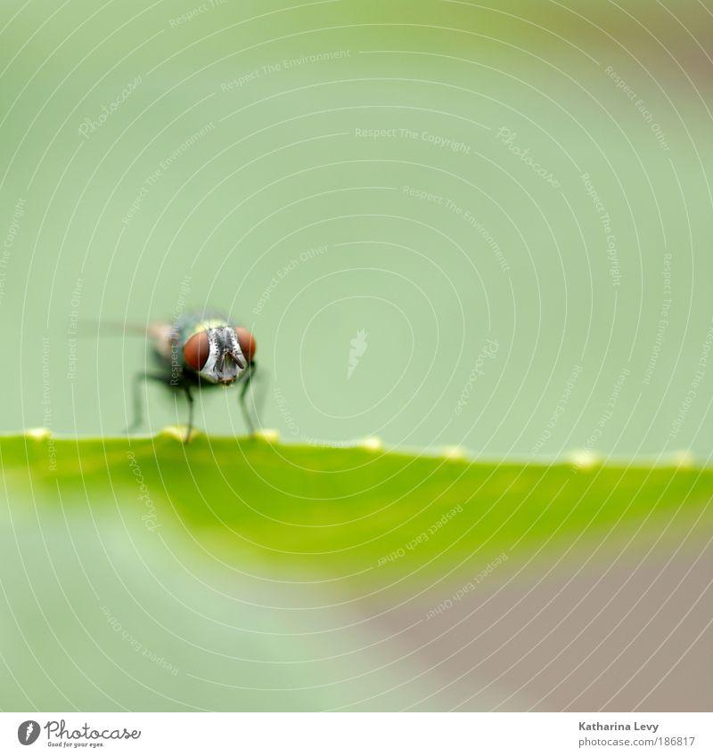 Starterlaubnis grün Pflanze Ferien & Urlaub & Reisen Tier Wiese oben Luft Feld Fliege frei Wetter Kommunizieren Tiergesicht bedrohlich Flügel Makroaufnahme