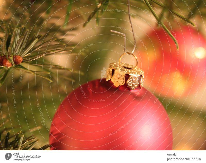 Auf ein gemütliches Weihnachtsfest... Weihnachten & Advent grün Erholung rot gelb Wärme Wohnung träumen Dekoration & Verzierung Ernährung Lebensfreude