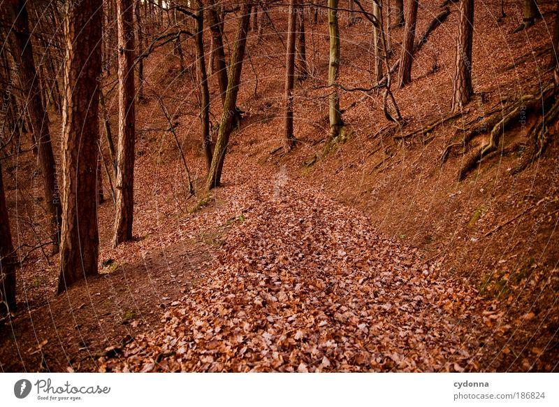 Herbstlaub Natur schön Baum rot ruhig Blatt Farbe Wald Leben Erholung träumen Wege & Pfade Landschaft Wind Umwelt