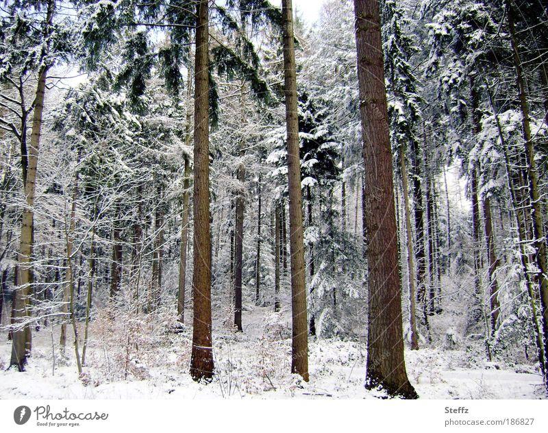 nicht gezuckert Winterwald Wintertag Schnee Winterpause Umwelt Natur Landschaft Eis Frost Baum Baumstamm Wald kalt schön weiß ruhig Winterstimmung Waldstimmung