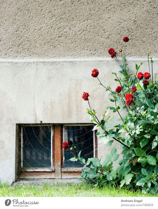 Tristesse Häusliches Leben Wohnung Haus Natur Landschaft Blume Gras Sträucher Garten Wiese Mauer Wand Fassade Fenster Kellerfenster Stein Beton alt trist grau