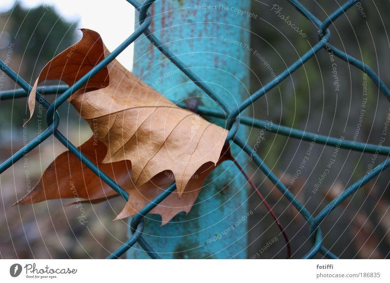 i need help Natur Himmel Herbst Blatt Stadtrand Metall Stahl Netz hängen warten alt blau braun Sehnsucht Angst hilflos allein Einsamkeit verfangen eingerollt
