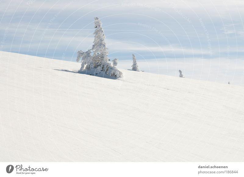 Weihnachtsbaum gefällig ?? Natur Himmel weiß Baum blau Winter Ferien & Urlaub & Reisen ruhig Ferne Schnee Berge u. Gebirge Landschaft Eis Wetter Umwelt Horizont