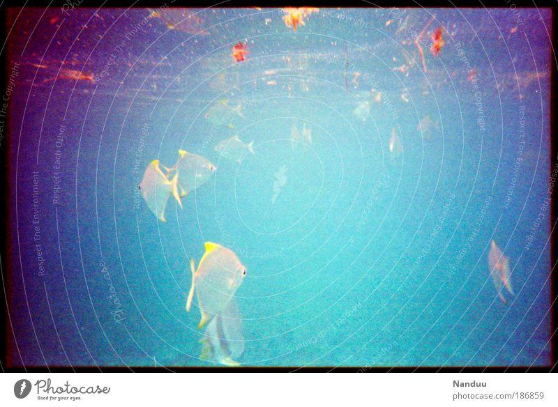 Lebensraum Natur Urelemente Riff Tier Wildtier Fisch Schwarm viele Meer Bildrauschen Seychellen tropisch tauchen Schnorcheln Wasser Farbfoto mehrfarbig