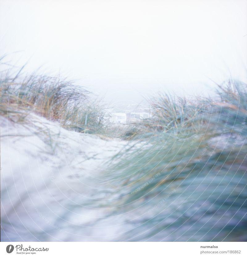 Ein Tag am Meer Ferien & Urlaub & Reisen Ausflug Ferne Freiheit Strand Wellen Winter Joggen Kunst Natur Landschaft Pflanze Nebel Eis Frost Seegras Ostsee