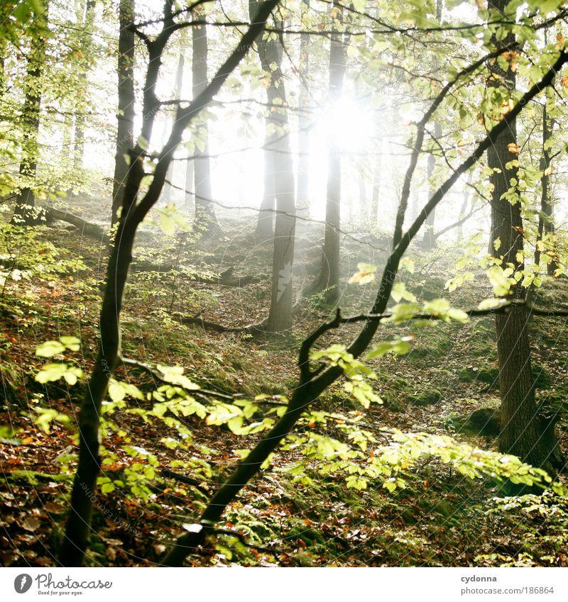 Durchlicht Leben harmonisch Wohlgefühl Erholung ruhig Ferne Umwelt Natur Landschaft Baum Blatt Wald einzigartig Energie geheimnisvoll Idylle Kraft Lebensfreude