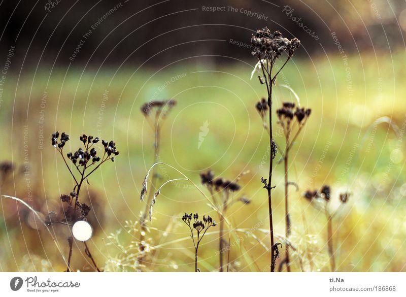 Trockenblumen Natur Sonne Pflanze Sommer Blatt Herbst Wiese Blüte Gras Landschaft glänzend Umwelt Wassertropfen Sträucher verblüht Stauden
