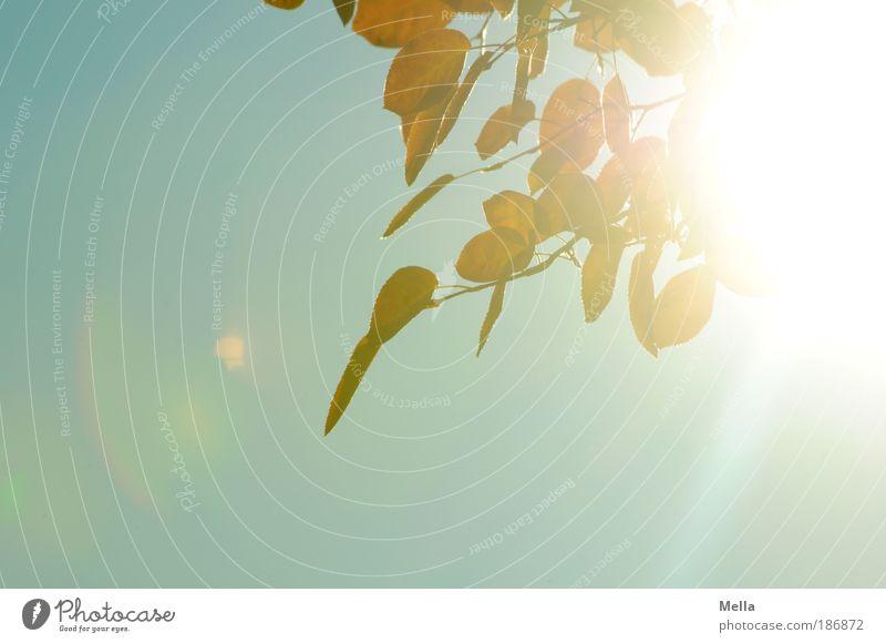 Shining Himmel Natur Pflanze Sommer Sonne Blatt Umwelt Leben Herbst natürlich Stimmung hell leuchten Klima Ast Lebensfreude