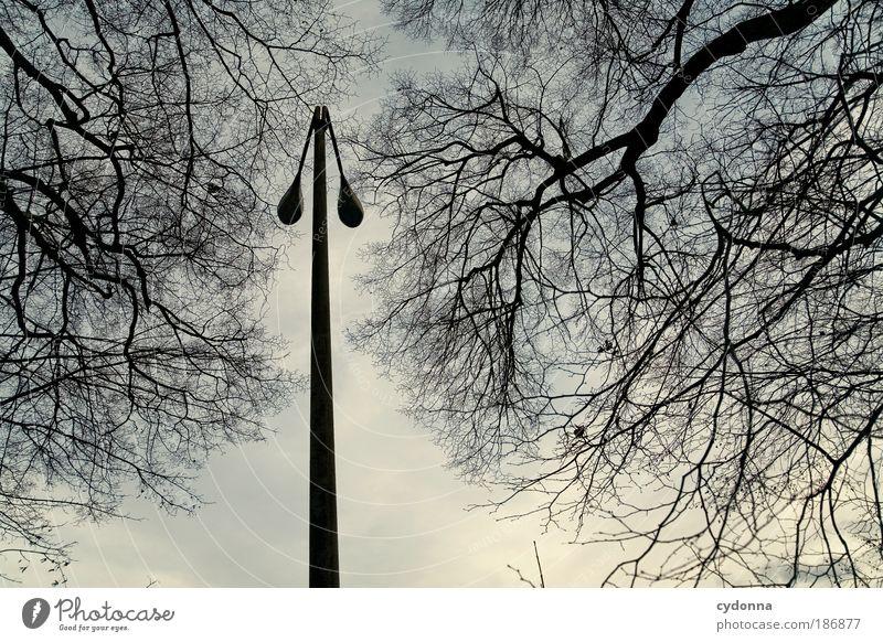 Licht aus Natur Himmel Baum ruhig Lampe Leben Herbst Tod träumen Traurigkeit Umwelt Zeit Perspektive ästhetisch Wandel & Veränderung Bildung