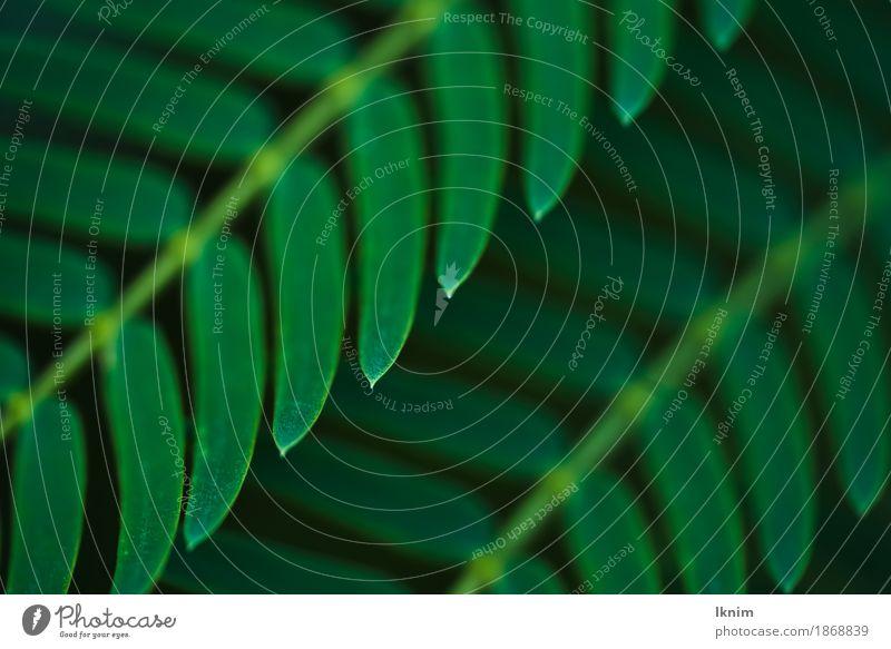Nahaufnahme von grünen Blättern Umwelt Natur Pflanze Farn Grünpflanze Design Naturliebe Makroaufnahme Blatt dunkel grüne farbe Zweig Farbfoto Detailaufnahme