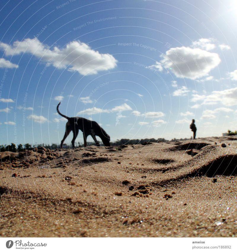 Ein Tag am Meer Wohlgefühl Erholung Strand Leben Sand Wolken Sonnenlicht Sommer Schönes Wetter Flussufer Tier Hund 1 genießen blau braun Elbe Außenaufnahme