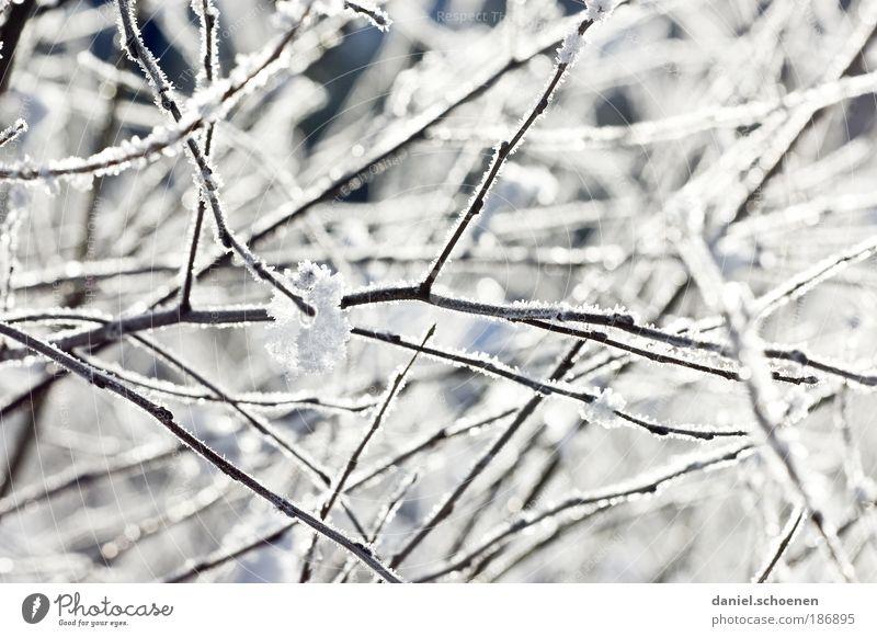Kälte für Alle ! Winter Klima Wetter Eis Frost Schnee Sträucher hell kalt weiß Ast Detailaufnahme
