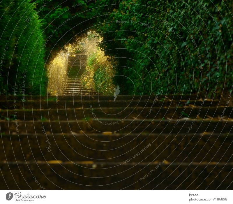 Stufen alt Baum grün Pflanze ruhig Tod träumen Wege & Pfade Stimmung Kraft gold Hoffnung Trauer Treppe Zukunft Romantik