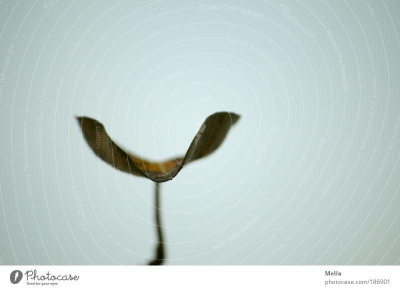 Alleinstellung Umwelt Natur Pflanze Himmel Herbst Winter Klima Wetter Blatt verblüht Wachstum natürlich trist grau Stimmung ruhig Traurigkeit Einsamkeit