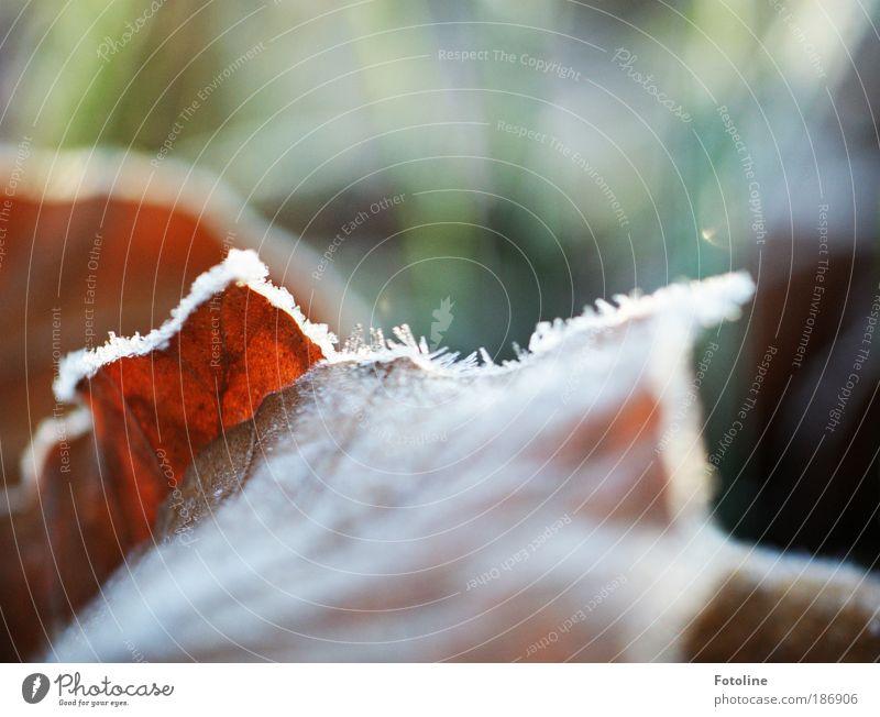 Herbst vs Winter Umwelt Natur Pflanze Wasser Sonnenlicht Klima Wetter Schönes Wetter Eis Frost Baum Gras Blatt Park Coolness hell kalt braun grün weiß Buche