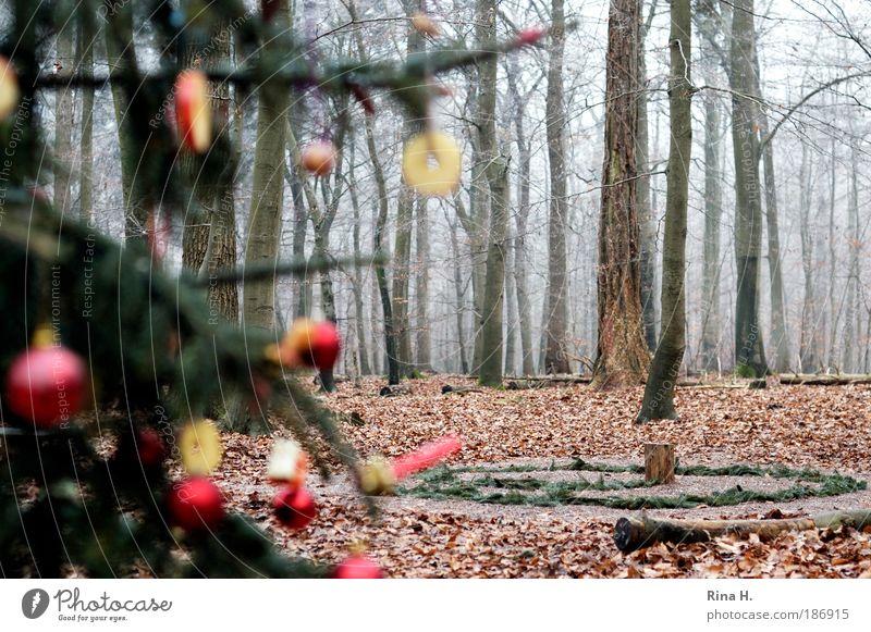 Weihnachtensbaum im Wald Natur Weihnachten & Advent grün rot Winter Freude Einsamkeit kalt Landschaft Gefühle Glück Zusammensein Kindergarten Nebel authentisch
