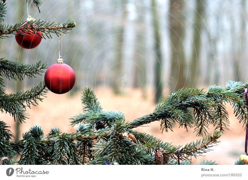Schmucker Wald Natur Weihnachten & Advent grün rot Einsamkeit Gefühle Glück außergewöhnlich Zufriedenheit einfach Lebensfreude Glaube Baumstamm Weihnachtsbaum