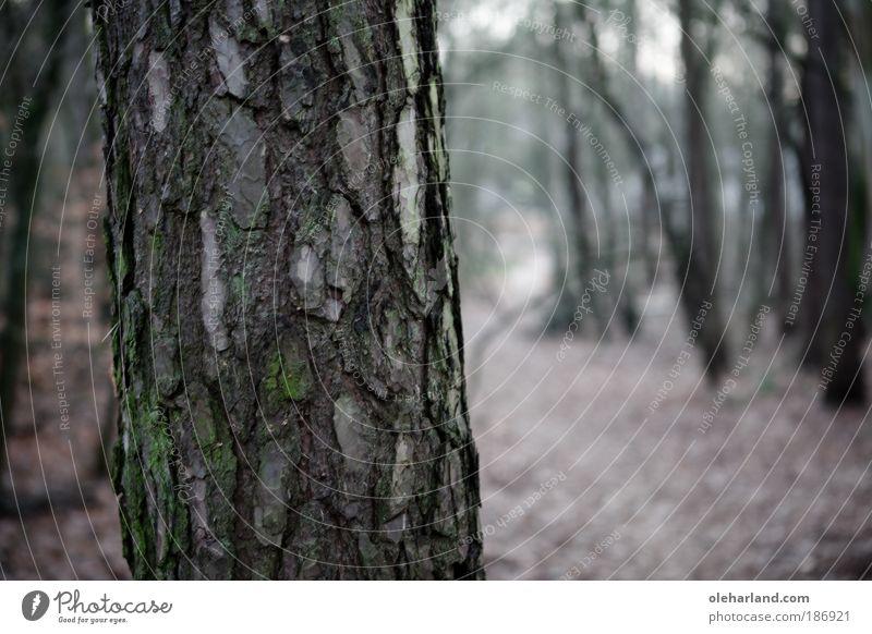 Stille Natur grün Baum Einsamkeit ruhig Wald Wege & Pfade träumen braun Ausflug wild Landwirtschaft entdecken Jagd genießen Wohlgefühl