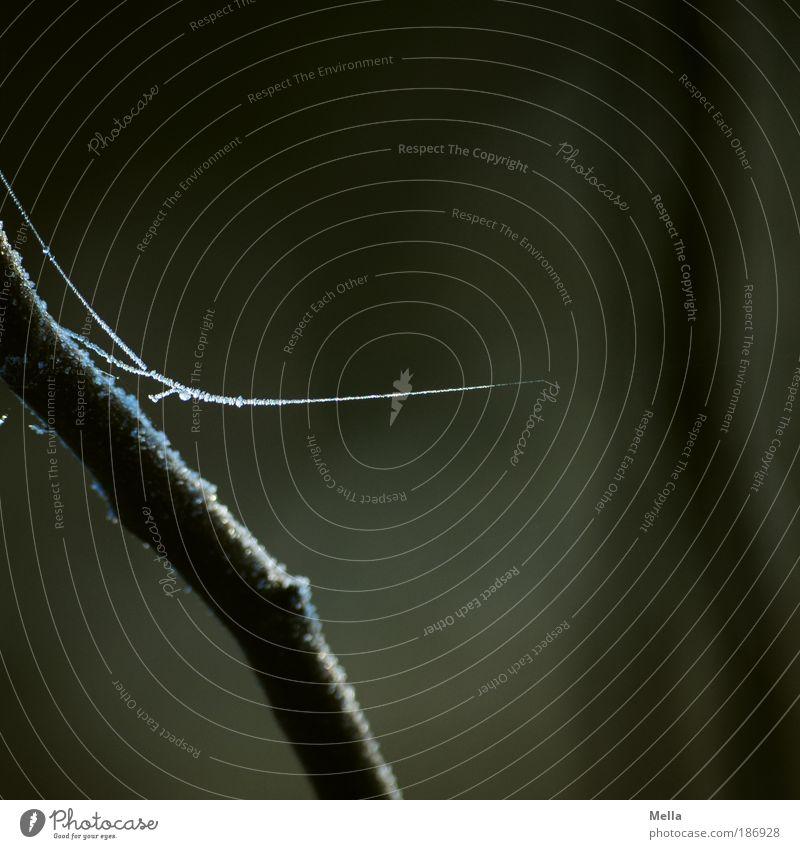 Ins Nichts Umwelt Natur Herbst Winter Klima Wetter Eis Frost Pflanze Schnur Netz hängen dunkel dünn kalt braun rein ruhig Raureif Spinnfaden Spinnennetz fein