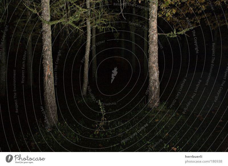 Horror Wald Umwelt Natur Mond Holz beobachten leuchten warten bedrohlich dunkel gruselig verrückt trocken braun grün schwarz Stimmung Tod Entsetzen Todesangst