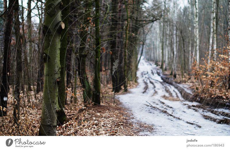 Waldweg Umwelt Natur Landschaft Pflanze Erde Winter Klima schlechtes Wetter Eis Frost Schnee Baum Wege & Pfade kalt weiß Ziel Fußweg trist gefroren Blatt