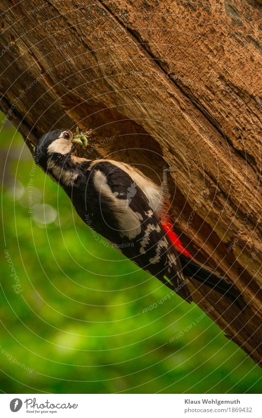 """""""Morgens um 10 in Deutschland"""" Lebensmittel Umwelt Natur Tier Frühling Sommer Baum Garten Park Wald Vogel Spinne Wurm Tiergesicht fliegen Fressen füttern braun"""