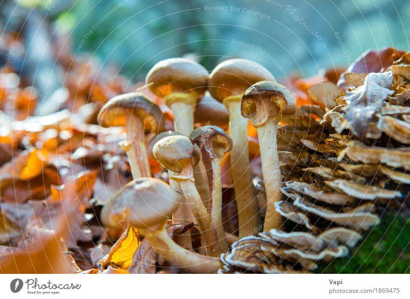 Gruppe Pilze Gemüse Bioprodukte Vegetarische Ernährung Diät Natur Pflanze Sonnenlicht Herbst Gras Moos Blatt Park Wald Wachstum frisch lecker natürlich wild