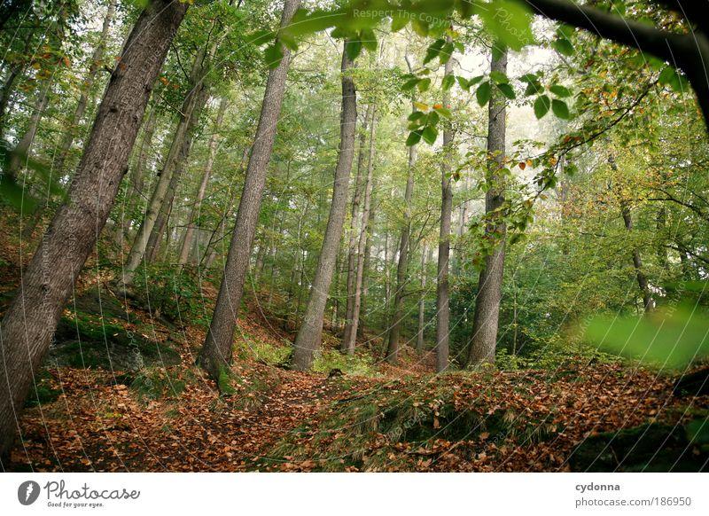 Durchatmen Natur schön Baum grün ruhig Blatt Wald Leben Erholung Freiheit träumen Wege & Pfade Landschaft Luft Umwelt Zeit