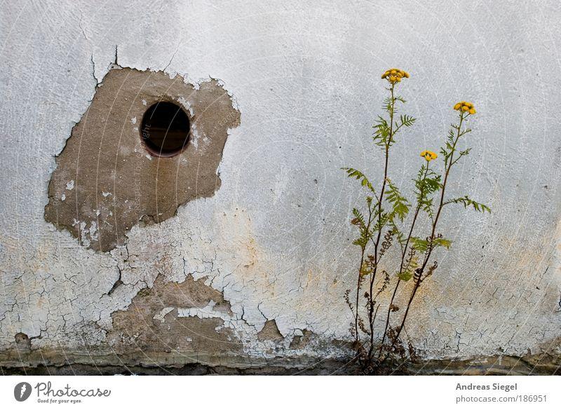 Spanien und Portugal (mit Loch) Natur blau Pflanze Blume Haus Wand Umwelt Landschaft grau Stil Stein Mauer Wohnung Fassade Beton trist