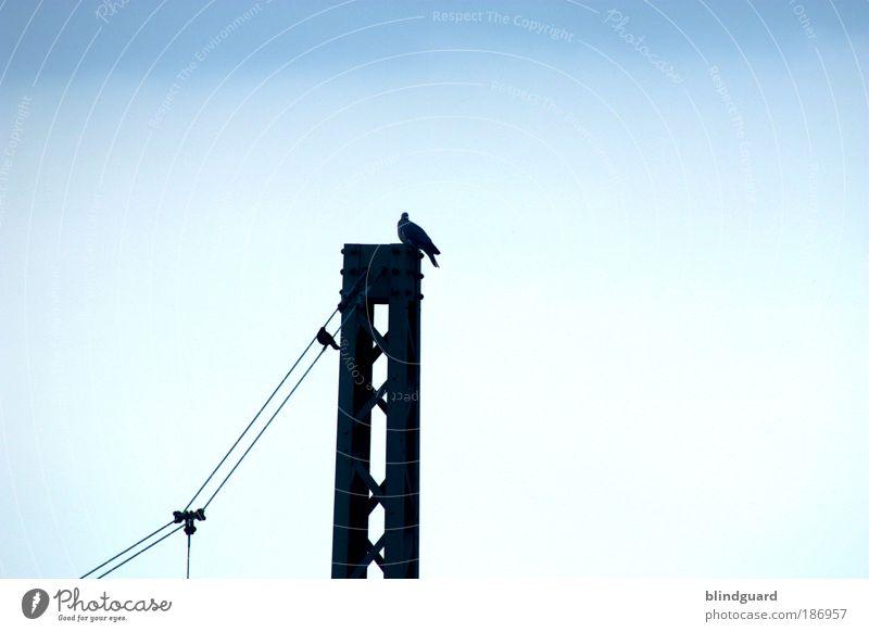 Master And Servant Himmel blau weiß Tier schwarz oben Metall Vogel sitzen Eisenbahn Energiewirtschaft Elektrizität Kabel Güterverkehr & Logistik unten hängen