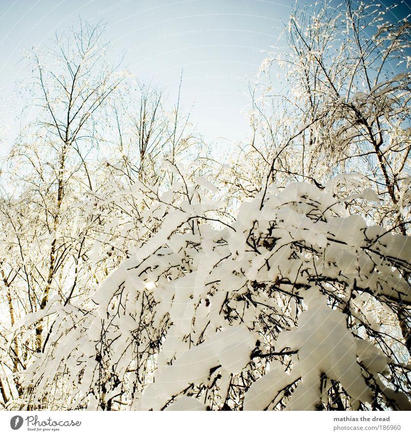 WINTERZAUBER Umwelt Landschaft Pflanze Himmel Winter Schönes Wetter Eis Frost Schnee Baum Sträucher Park Wald kalt schön Idylle bedeckt Schneeflocke Ast weiß