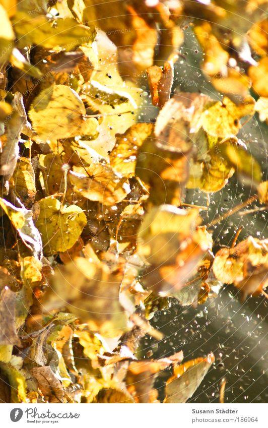 Flyer Natur Baum Pflanze Blatt gelb Wiese Herbst Spielen Freiheit Park braun blond gold fliegen dreckig Luftverkehr
