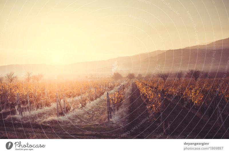 Weinberge bei Sonnenaufgang. Herbstliche Weinberge am Morgen Ferien & Urlaub & Reisen Tourismus Natur Landschaft Himmel Wachstum gelb grün rot Sonnenuntergang