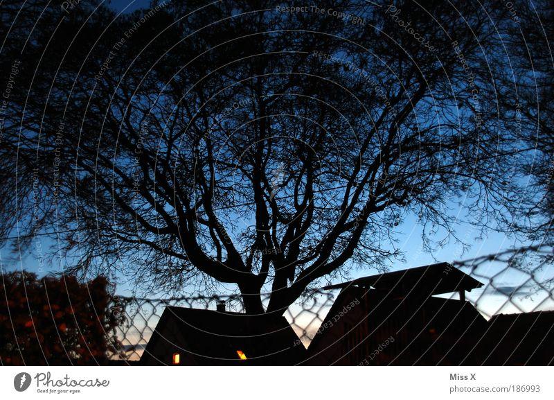 blaue Stunde Garten Nachthimmel Baum Park Haus Einfamilienhaus leuchten gigantisch Zaun Farbfoto Außenaufnahme Menschenleer Abend Dämmerung Licht Schatten