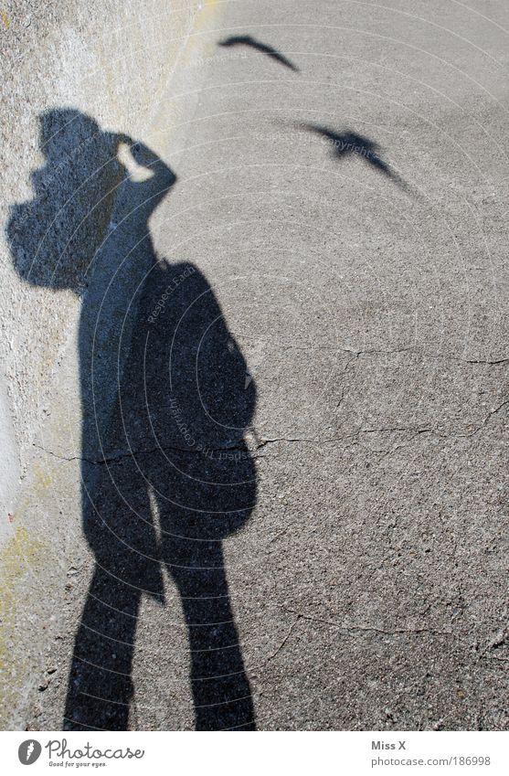 Die Vögel Freizeit & Hobby Ferien & Urlaub & Reisen Ausflug Mensch 1 Vogel fliegen gruselig lustig grau Angst gefährlich Horrorfilm Fotografieren Außenaufnahme