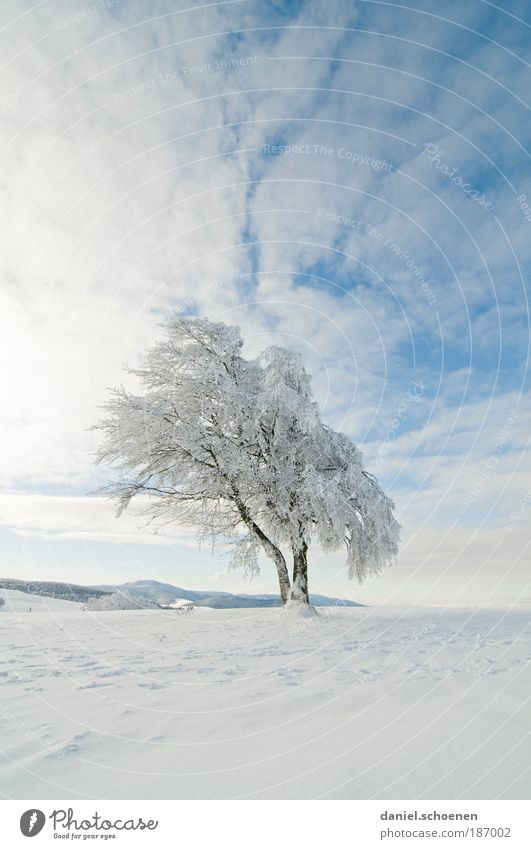 endlich kalte Finger !! Himmel Sonne Winter Schönes Wetter Eis Frost Schnee Baum Ferne Schwarzwald weiß blau Textfreiraum oben Textfreiraum unten Sonnenlicht
